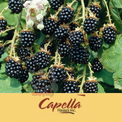Capella - Blackberry (Ежевика)